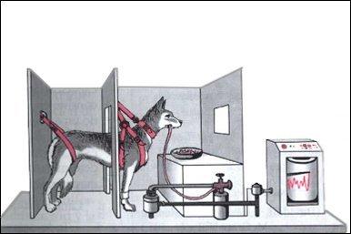 El perro de Pávlov
